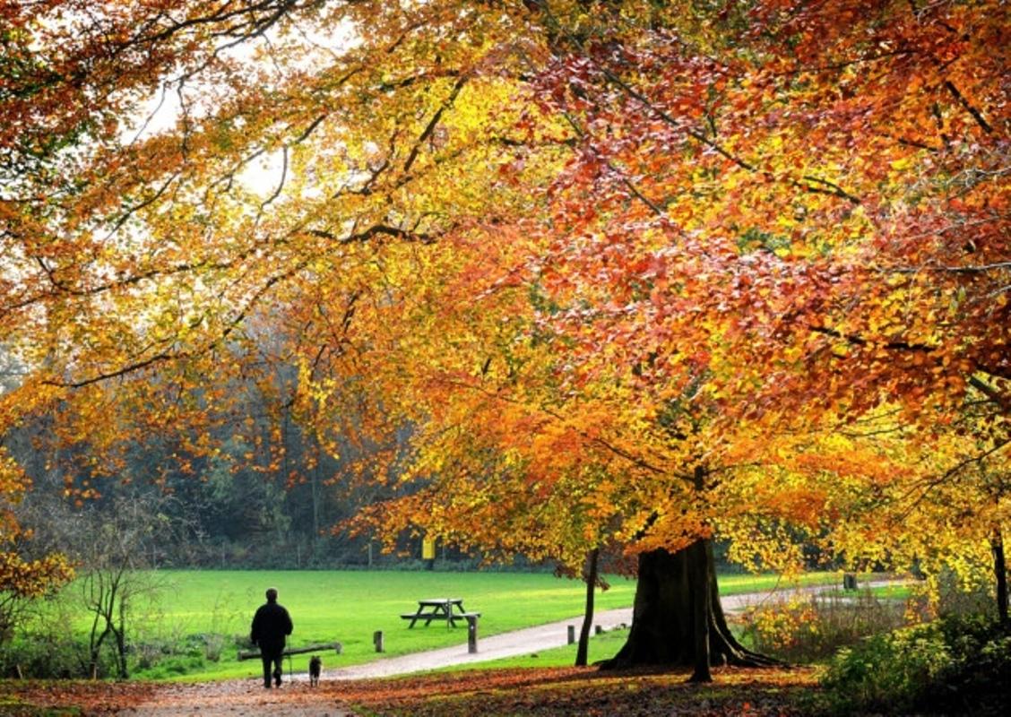 Autumn in Norfolk